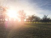 Trees on field in backlight - LVF07961