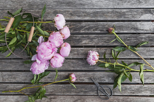 Peonies in basket on garden table - GWF06030