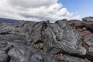 USA, Hawaii, Big Island, Volcanoes National Park, Ka Lae Apuki, lava fields - FOF10535