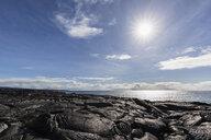 USA, Hawaii, Big Island, Volcanoes National Park, Ka Lae Apuki, lava fields - FOF10553