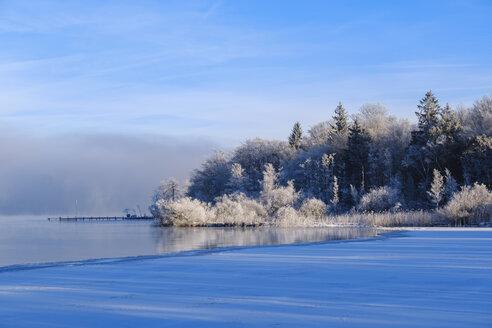 Starnberger See nahe Sankt Heinrich, bei Münsing, Fünfseenland, Oberbayern, Bayern, Deutschland - SIEF08548
