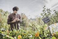 Man in urban garden examining flower - VGPF00003