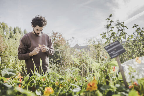 Man in urban garden examining flower - VGPF00003