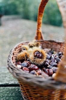 Basketful of chestnuts - CUF50053