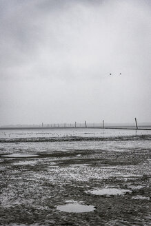 Germany, Nessmersiel, mudflat - EGBF00300