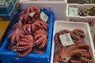 Japan, Tokyo, Tsukiji, boxes of fresh squid at the fish market - RUNF01811