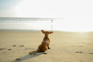 Portrait of dog on beach - ISF21061