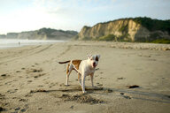 Portrait of dog on beach - ISF21067