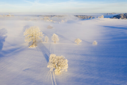 Germany, Bavaria, Holzhausen near Muensing, foggy winter landscape at sunrise, aerial view - SIEF08565