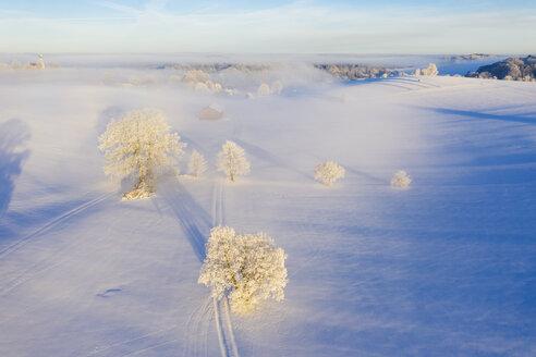 Winterlandschaft mit Nebel bei Sonnenaufgang, Holzhausen, bei Münsing, Fünfseenland, Drohnenaufnahme, Oberbayern, Bayern, Deutschland - SIEF08565