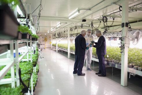 Growers meeting, inspecting cannabis seedlings in incubation - HEROF35482