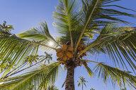 USA, Hawaii, Big Island, Pu'uhonua o Honaunau National Park - FOF10629