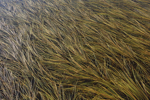 Grass in water of small pond - RUEF02162