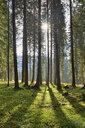 Italy, Dolomites, Trentino-Alto Adige, Forest in Val Venegia, Parco Naturale Paneveggio Pale Di San Martino - RUEF02168