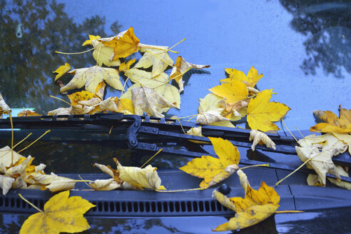 Germany, yellow autumn leaves on windscreen of parked car, close-up - AXF00826