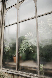 Window of a greenhouse - LHPF00534