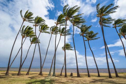 Hawaii, island of Molokai, Kakahaia beach park, palm trees - RUNF01864