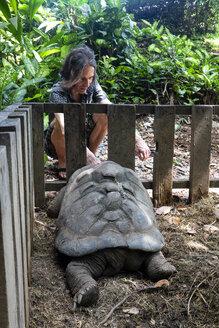 Seychelles, tourist watching Seychelles giant tortoise - NDF00883