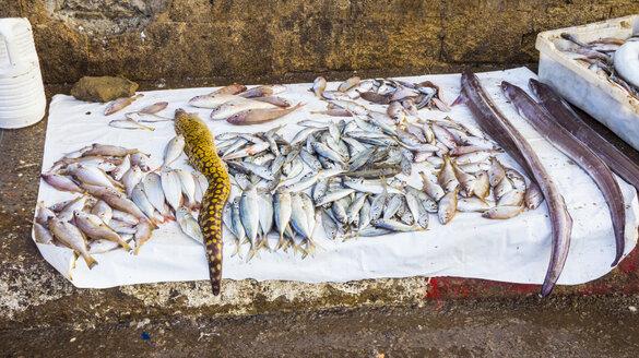 Morocco, Essaouira, fresh fish at the harbor - HSIF00513