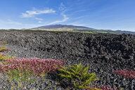 USA, Hawaii, Mauna Loa volcano, lava fields - FOF10680