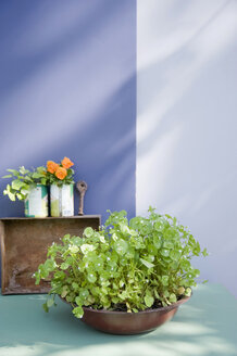 Bowl with planted purslane, ivy and pansies on a balcony - GISF00424