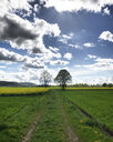 Fields and trees in spring - LVF07972