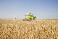 Austria, Burgenland, combine harvester on a wheat field - AIF00672