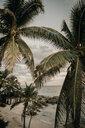 Mexico, Quintana Roo, Tulum, palm beach - LHPF00671