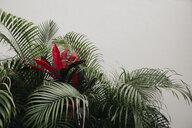 Mexico, exotic plant - LHPF00689