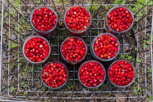 Jars of red strawberries in metal bin - BLEF00437