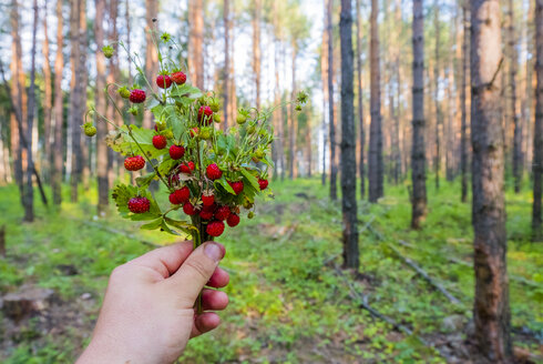 Hand holding bouquet of strawberries in forest - BLEF00440