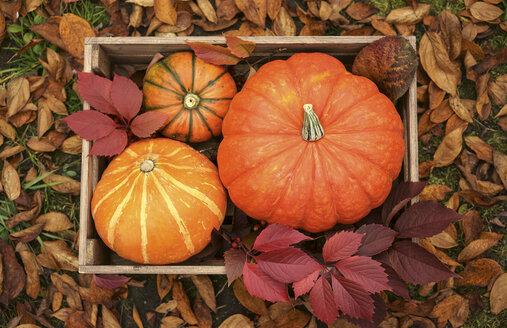 Pumpkins in wooden crate - BLEF00491