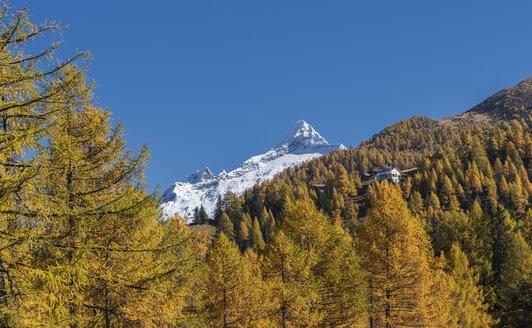 Autumn trees near snow covered mountains - BLEF01127