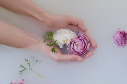 Hands of Caucasian woman cupping flowers in milk bath - BLEF01788
