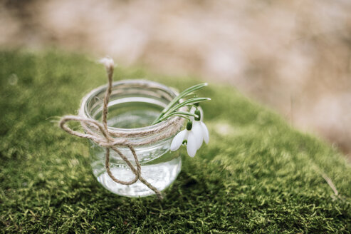 Close up of flowers in jar on moss - BLEF02049