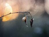 Snail hanging on leaf in rain - BLEF02052