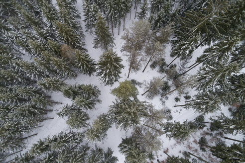 Coniferous forest in winter seen from above - RUEF02181