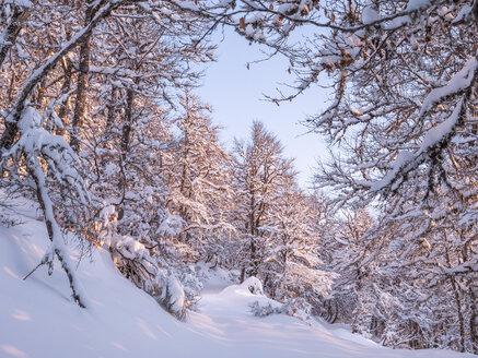 Spain, Asturia, Picos de Europa, Mirador De Piedrashistas, mountain forest in winter - LAF02282
