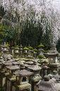 Japan, Kansai, Nara, lots of toro stone lanterns in the Unesco world heritage sight - RUNF01913