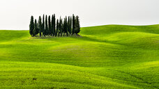 Italy, Tuscany, scenic with cypress grove - STSF01963