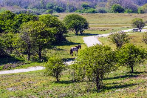 Ansichten von Domburg in Zeeland und Umgebung, Niederlande, Europa - THAF02498