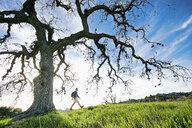 Caucasian man walking in field near tree - BLEF02131