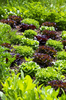 Bed with salad and parsley - NDF00930