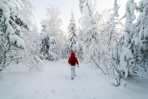 Caucasian woman hiking in snowy forest - BLEF02680