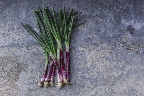 Purple spring onions - STBF00329