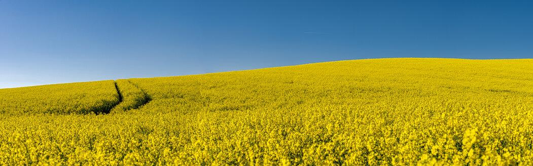 Germany, Mecklenburg-Western Pomerania, flowering rape field, panorama - FRF00828