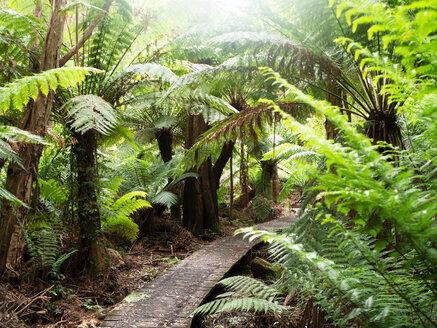 Path through green tree ferns, Wilson's Promontory National Park, Victoria, Australia - CUF50917