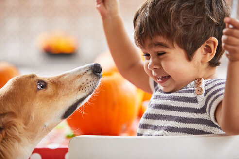 Boy playing with pet dog in kitchen - CUF51085