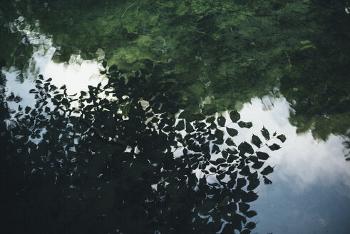 Reflection of green leaves in still water - BLEF03162