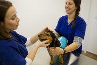 Veterinarians comforting dog before treatment - CUF51107
